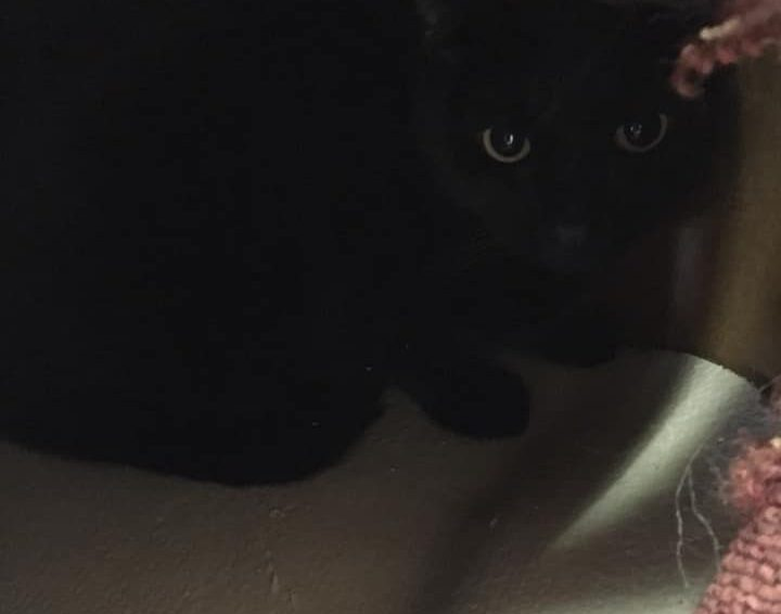Max (adopterad)