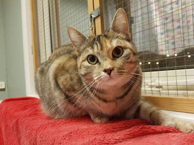 Maja (adopterad)