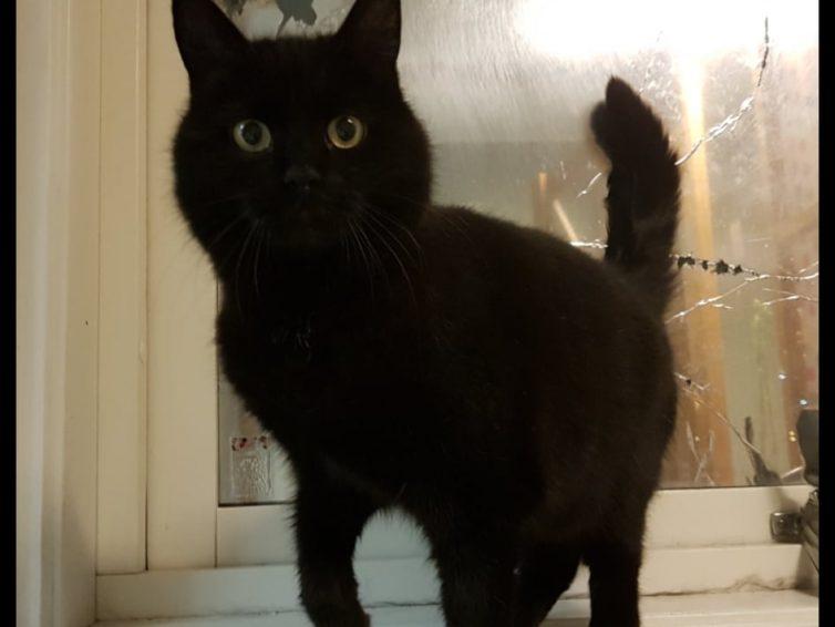 Zorro (adopterad)