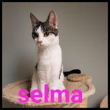 Selma (adopterad)